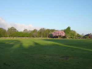 Image of football pitch at Hanham Common with Cherry tree in blossom in the background